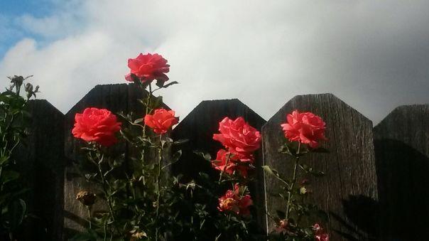 RoseFence
